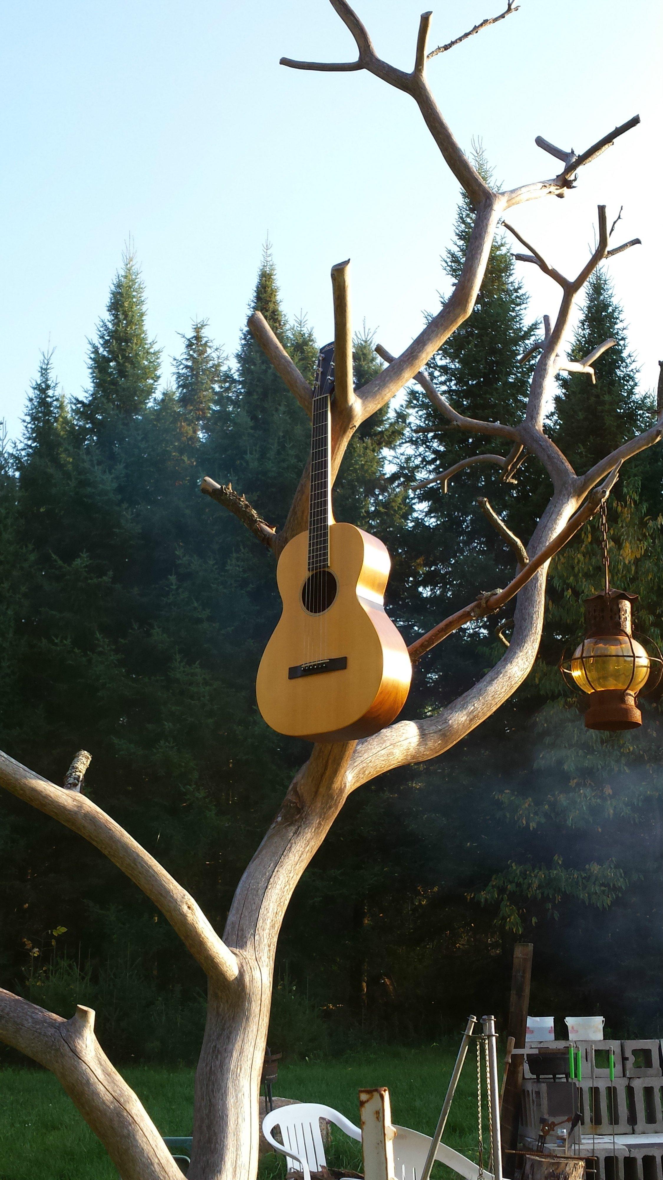 about tree solutions antigo wi