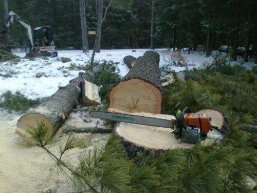 tree service antigo wi